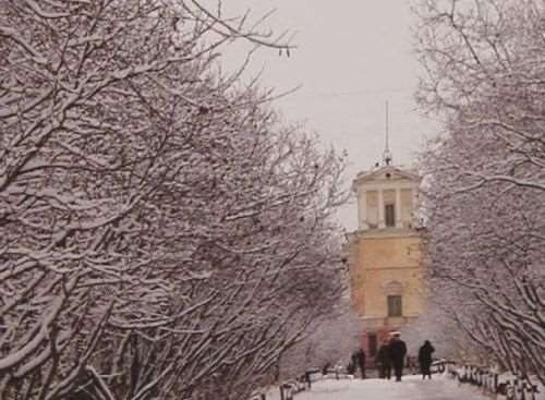 Магаданцы отстояли историческую аллею в центре города