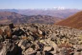 Лишайники помогут изучить последствия изменений климата на Алтае