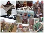 О современном состоянии популяций водоплавающих птиц юга Западной Сибири