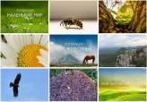 Межрегиональный онлайн-конкурс фотографий и видеороликов «Этот удивительный мир»