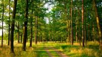Кировское отделение ОНФ приступает к работе по созданию в регионе «зеленых щитов