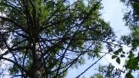 Шлюзовским лесам - статус особо охраняемой территории