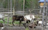 Ученые  предложили альтернативный вариант зонирования природного парка «Нумто»
