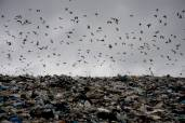 Широкореченский мусорный полигон (г.Екатеринбург). Фото: Алексей Белоусов