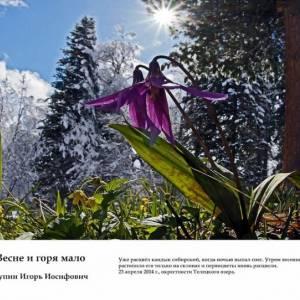 Международный конкурс фотографий «Живая природа Алтая»