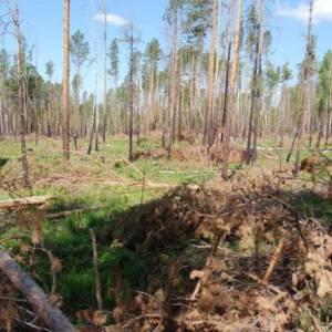 О самых острых лесных проблемах Иркутской области