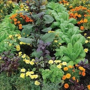 Чтобы сад сам за собой ухаживал