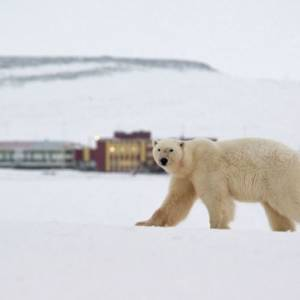 Медвежий оскал милитаризма