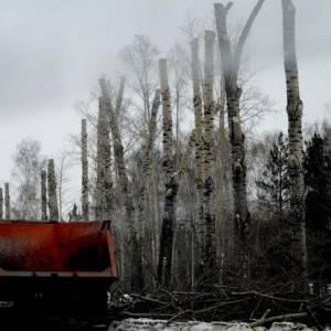 Боль деревьев и людей