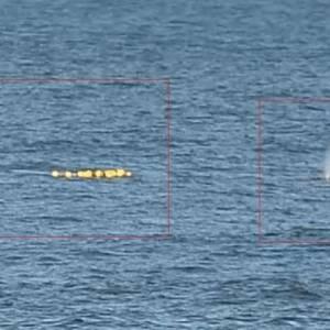 Серый кит запутался в ставном неводе у берегов Сахалина