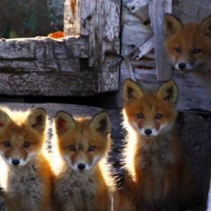 Проблемы и перспективы развития экотуризма на Чукотке