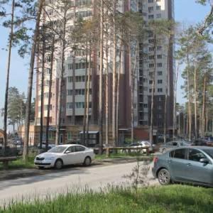 Дикая природа в городе: культурный контекст