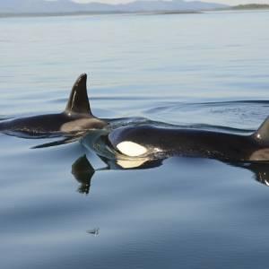 Снимок, сделанный «Друзьями океана» в экспедиции