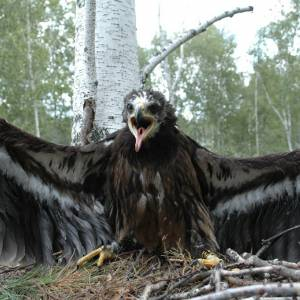 Итоговая конференция природоохранных инициатив юга Западной Сибири
