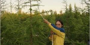 Сохраним лес вокруг себя