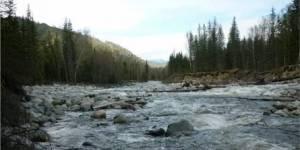 Спасение реки Мульта