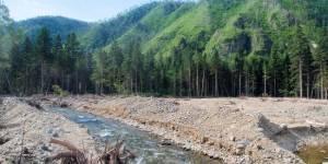 Системный кризис лесного хозяйства Приморского края. Пути преодоления