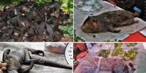 Прекратить продажу и использование диких животных для пищи и медицины в Китае!