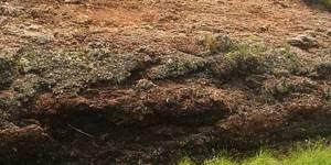 Утилизация гидролизного лигнина переработкой в удобрения и почвообразователи