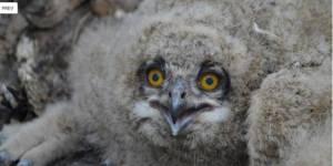 Проект по спасению редких видов в заказниках Алтая подвёл итоги работы за 2016 год