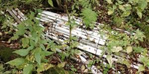 В кировском лесу обнаружена свалка высокоопасных отходов