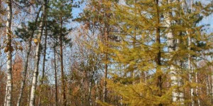 Научно-практическая междисциплинарная конференция «Уникальный  памятник природы  Шлюзовской лесоболотный комплекс «Сказочный». Экология и охрана».