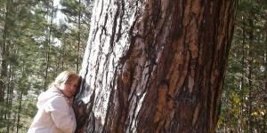 Самое большое дерево Быстроистокского района