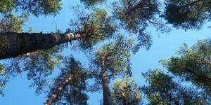 Кто будет заниматься предупреждением пожаров и восстановлением лесов
