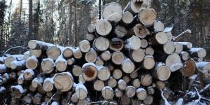 Законно - незаконная вырубка на особо охраняемой природной территории в Порошино