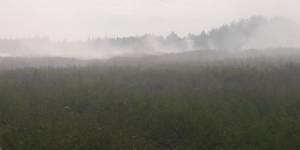 Кировские активисты ОНФ взяли на контроль устранение возгорания на полигоне ТКО в Котельничском районе
