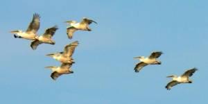 Сохранение редких видов птиц Новосибирской области