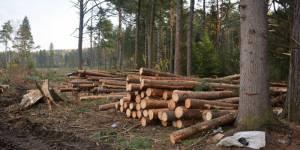 Активисты ОНФ в Томской области добились остановки масштабных рубок леса около села Батурино