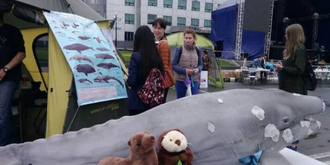 Сахалинцы узнали как вести себя при встречах с китами и тюленями