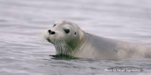 Разработка водных маршрутов по наблюдению за морскими млекопитающими (Whale Watching) и птицами (Seabirds Watching) в Анадырском лимане как одной из активных форм экологического просвещения