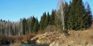 Добровольцы на страже лесов Алтая: итоги работы