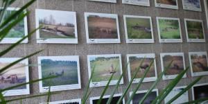 Год экологии открыли в барнаульской библиотеке