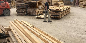 Кировские активисты ОНФ выявили факты продажи древесины с нарушениями