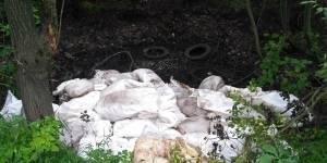 Кировские активисты ОНФ обратились к органам власти по поводу загрязнения лесного массива в Ганино отходами животноводства