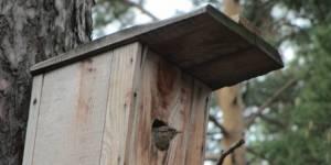 Весенние наблюдения за птицами  томских школьников - участников  городской программы «Экополюс»