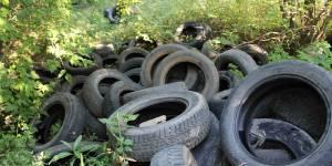 Кировские активисты ОНФ взяли на контроль устранение свалок вблизи памятника природы