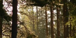 Наш лес - в наших руках!