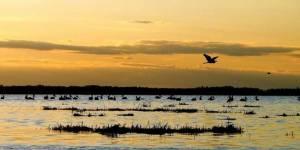 Сохранение ключевых орнитологических территорий юго-запада Новосибирской области