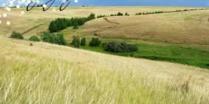 Сохранение луговых степей Кулунды, как убежища редких и краснокнижных видов и источника кормовых растений