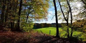 Интересные факты о деревьях. Последние исследования и технологии