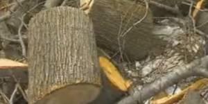 Кто и как занимается лесовосстановлением в Приморском крае