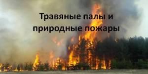 Школьный урок «Травяные палы и природные пожары» и кампания Гринпис «Останови поджоги травы»