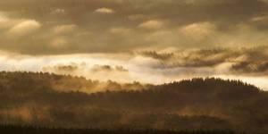 Малонарушенные лесные территории: инструкция против стратегии