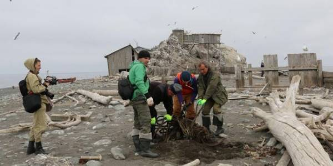 Остров Тюлений стал чище