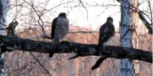Создание сети особо охраняемых природных территорий в бассейне реки Издревая