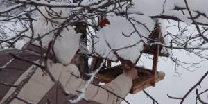 Зимние дела и заботы сарасинских юннатов